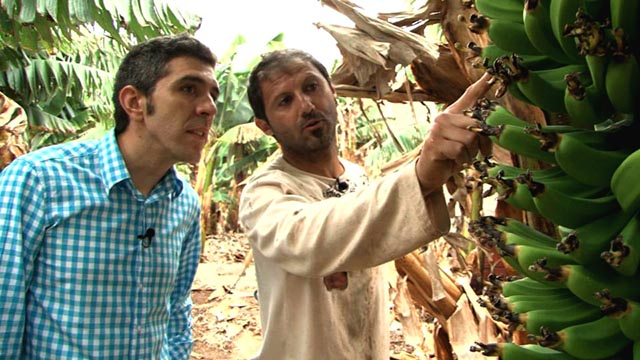 Comando Actualidad - Esto sí que es bueno - Plátanos de Canarias