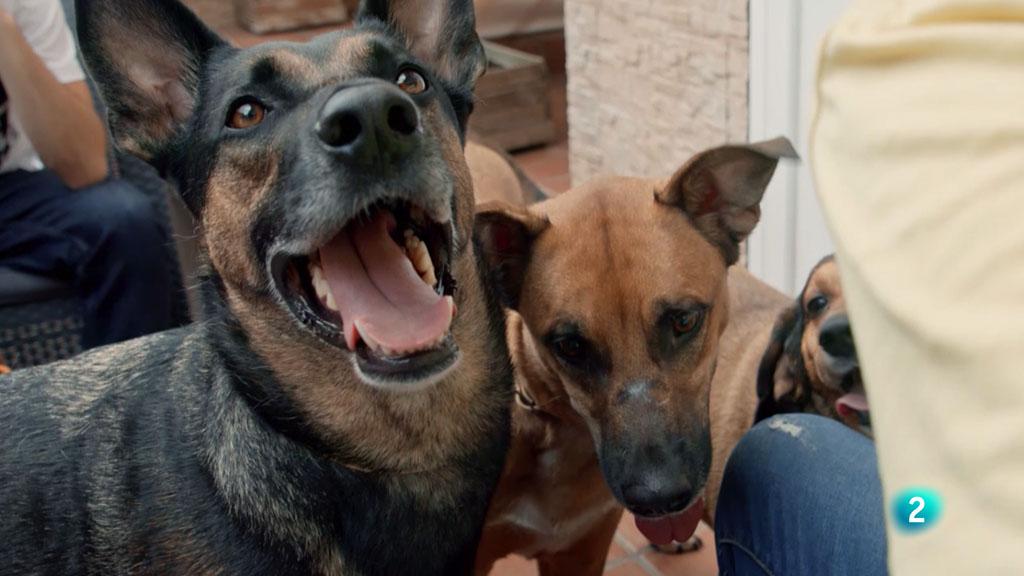Plomo i Diesel, la història del destí - La meva mascota i jo