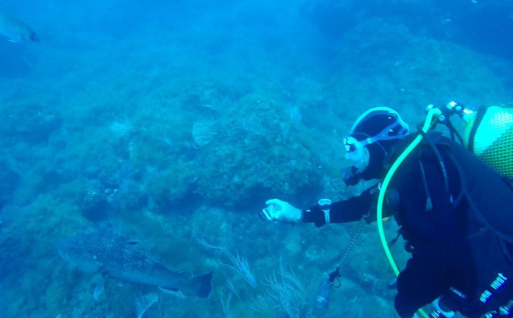 Repor - Presión bajo el agua