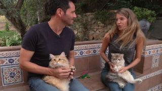 Aquí la tierra - ¿Produce alergia el pelo de los gatos?