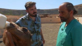 Aquí la tierra - De profesión, veterinario de camellos
