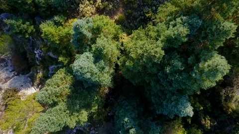 El señor de los bosques - Programa 10
