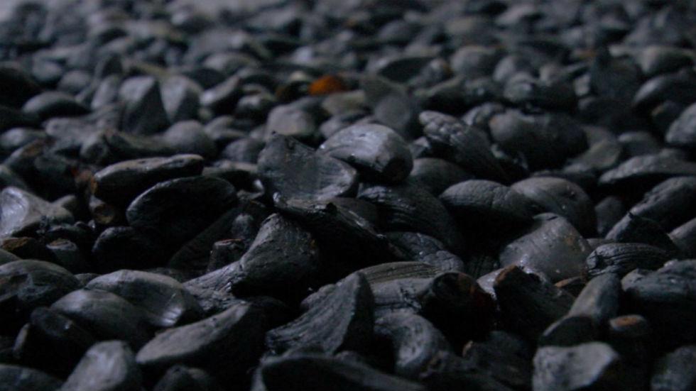 Aquí la tierra - Propiedades del ajo y la cebolla negra
