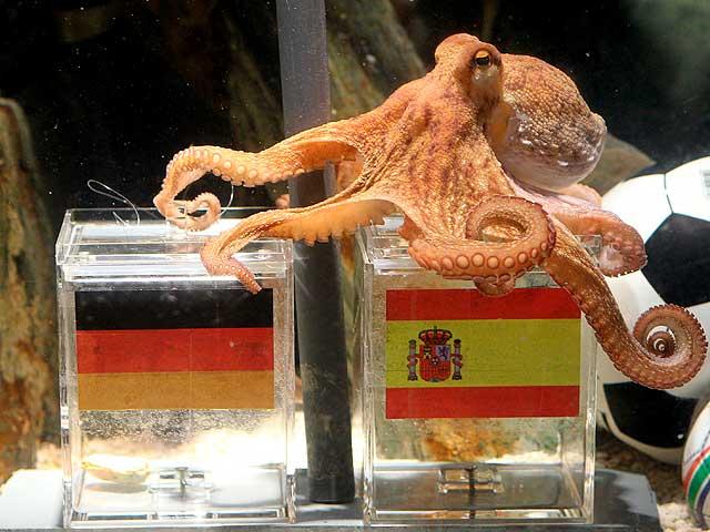 El pulpo alemán cree que ganará España