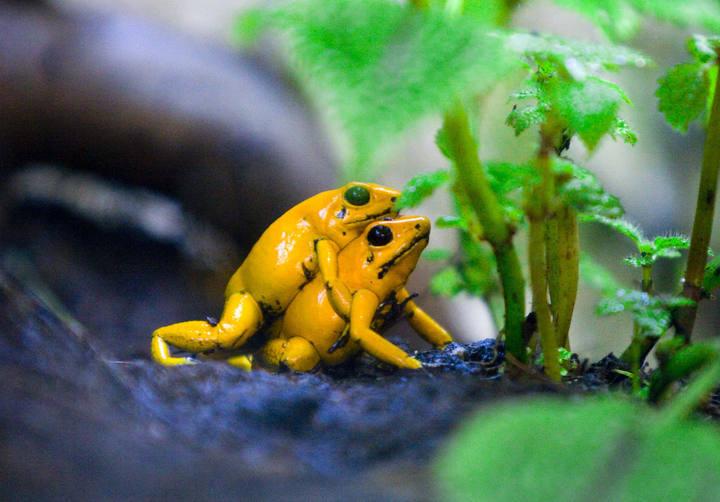 Los animales de nuestra vida julio 2010 - Imagenes de animales apareandose ...