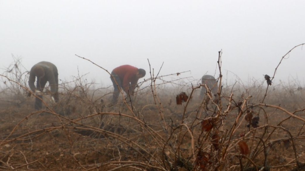 Aquí la tierra - Recuperamos viñedos centenarios