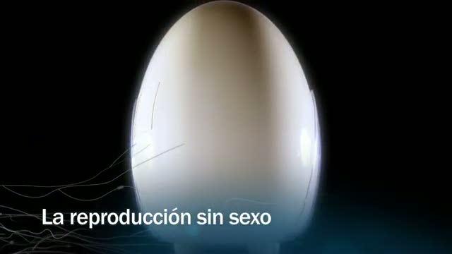 Redes - La reproducción sin sexo - avance