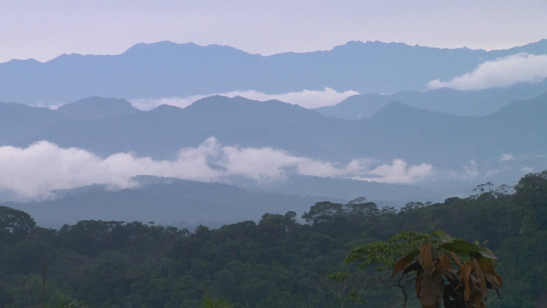 'Frontera de la narcoguerrilla' - Refugiados colombianos