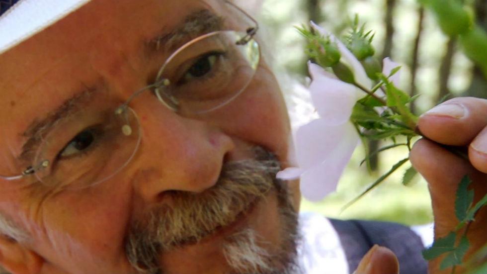 Aquí la tierra - Remedios con rosal silvestre
