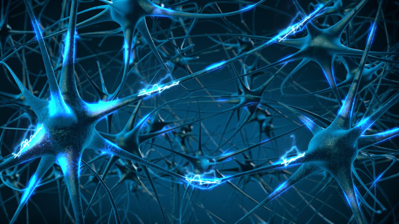 El Primer Mapa En 3d De La Red Neuronal Del Cerebro Revela
