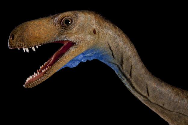 Una reproducción a escala de la cara del Eodromaeus