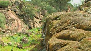 El bosque protector - Restauración de hábitat