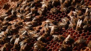 Aquí la Tierra - A la rica miel de la Alcarria