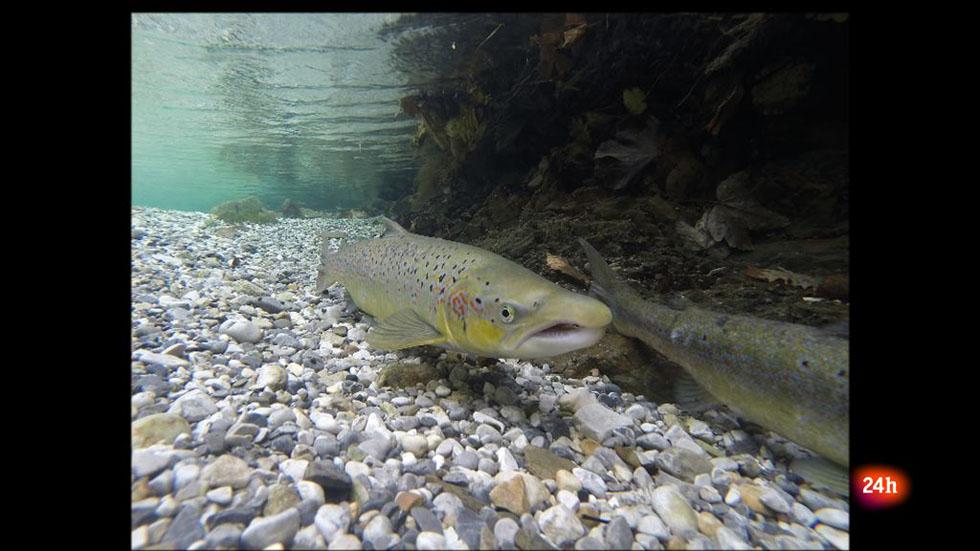 Repor - Salmones lejanos