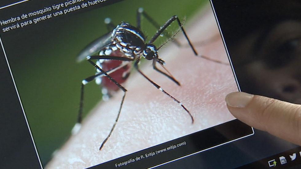 El Ministerio de Sanidad no ve alarmante la presencia del mosquito tigre