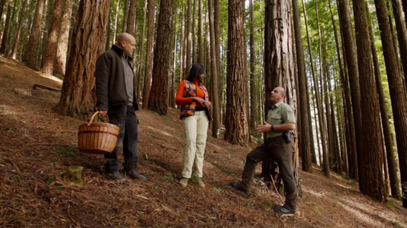 El señor de los bosques - Santander