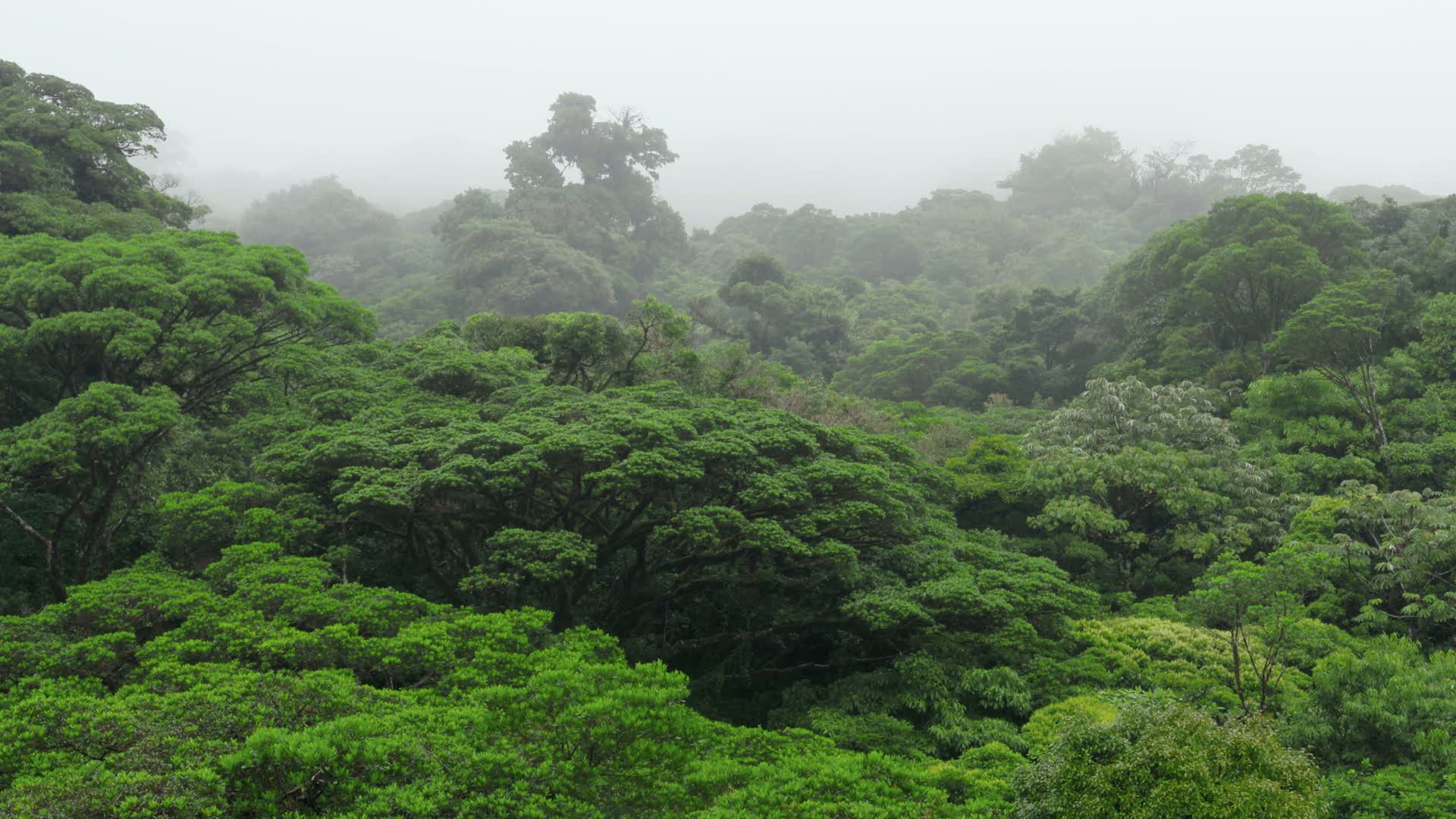 Esta s bado en 39 planeta selva 39 la selva tropical nubosa en costa rica - El tiempo en macanet de la selva ...