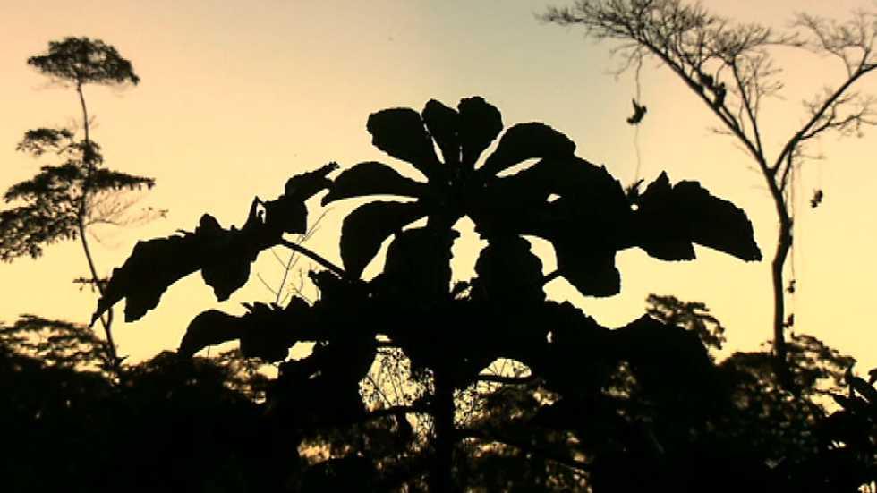 Pueblo de Dios - Sepahua: la madera de la casa común