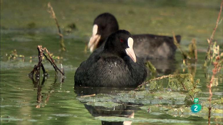 La Aventura del Saber. TVE. Serie 'Reservas Ornitológicas': Los Albardales
