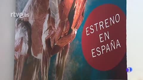 """Sevilla estrena la exposición """"Animal Inside out"""", la vida salvaje al descubierto"""