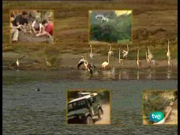 Guardianes de hábitat - Solitarios y errantes