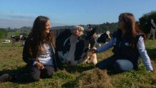 Aquí la Tierra - ¡Tengo una vaca lechera!