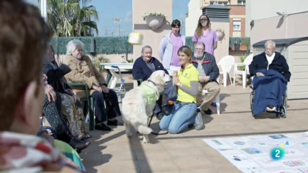 La meva mascota i jo - La teràpia amb cavalls i gossos