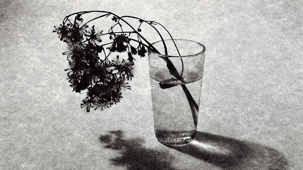 Imprescindibles - El tiempo y las cosas. Toni Catany