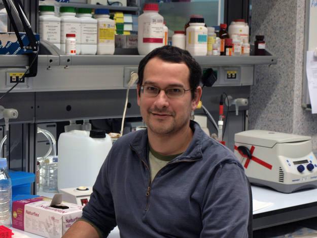 Tomás Marquès-Bonet, único investigador español en el estudio