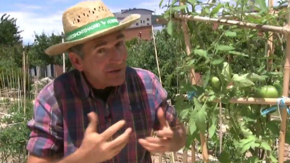 Aquí la tierra - Tomateras, muy vivas