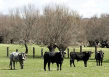 La polémica sobre las corridas de toros en Informe Semanal 1266400253497