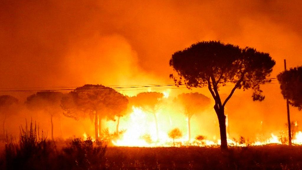 Los trabajadores de una carbonería investigados por el incendio de Moguer, en Huelva, declaran ante el juez
