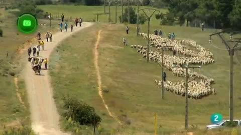 Agrosfera - En clave rural - Trashumantes