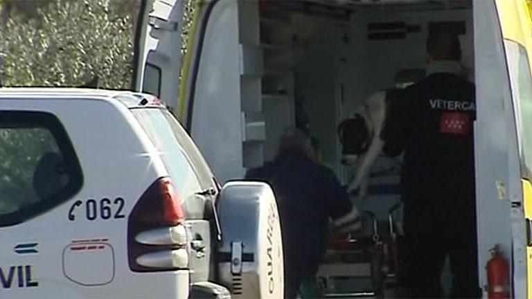 T con T - Tres pitbull atacan a un hombre en Torrelaguna (Madrid)