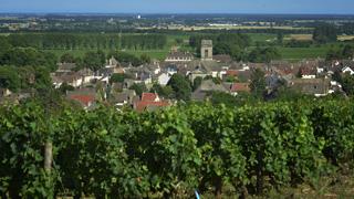 Unos 14.700 temporeros trabajarán este año en la vendimia en Francia