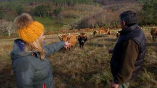 Aquí la tierra - Vaca cachena, raza gallega