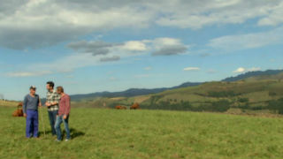 Aquí la tierra - Vaca pasiega, emblema de Cantabria