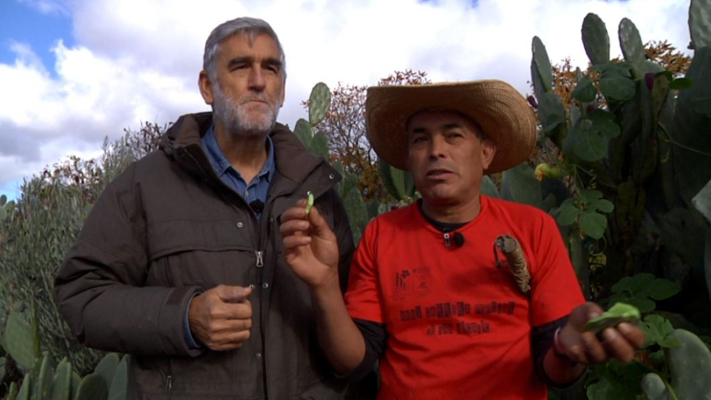 Aquí la Tierra - ¡Viva México y su gastronomía!