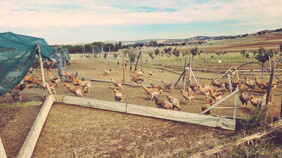 España Directo- Vivir de otro modo: una granja ecológica