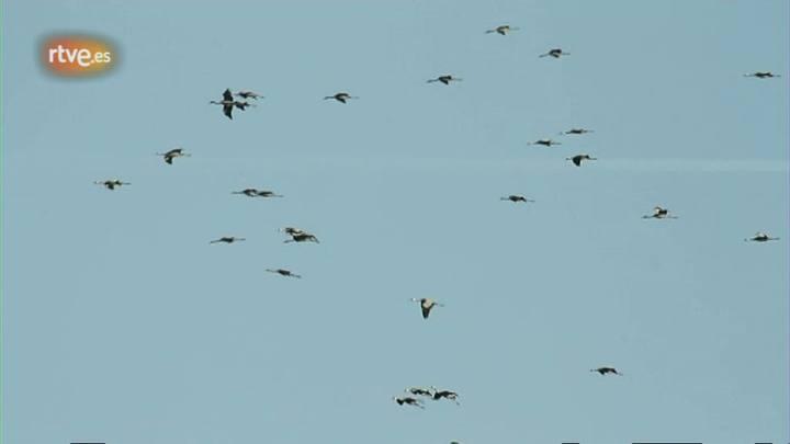 El escarabajo verde - Volando voy - avance