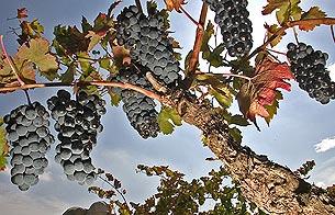 Algunos vinos no conocen lo que es la crisis