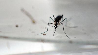 868c82a41 Descubren que anticuerpos eficaces para combatir el dengue también pueden  actuar contra el zika
