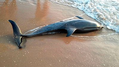 avistamiento tiburon blanco españa