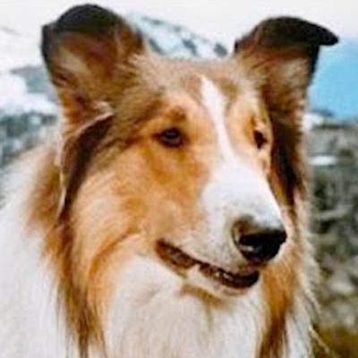 La perrita Lassie