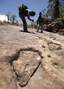 Hallan en Burgos las huellas de Estegosaurio más grandes del mundo