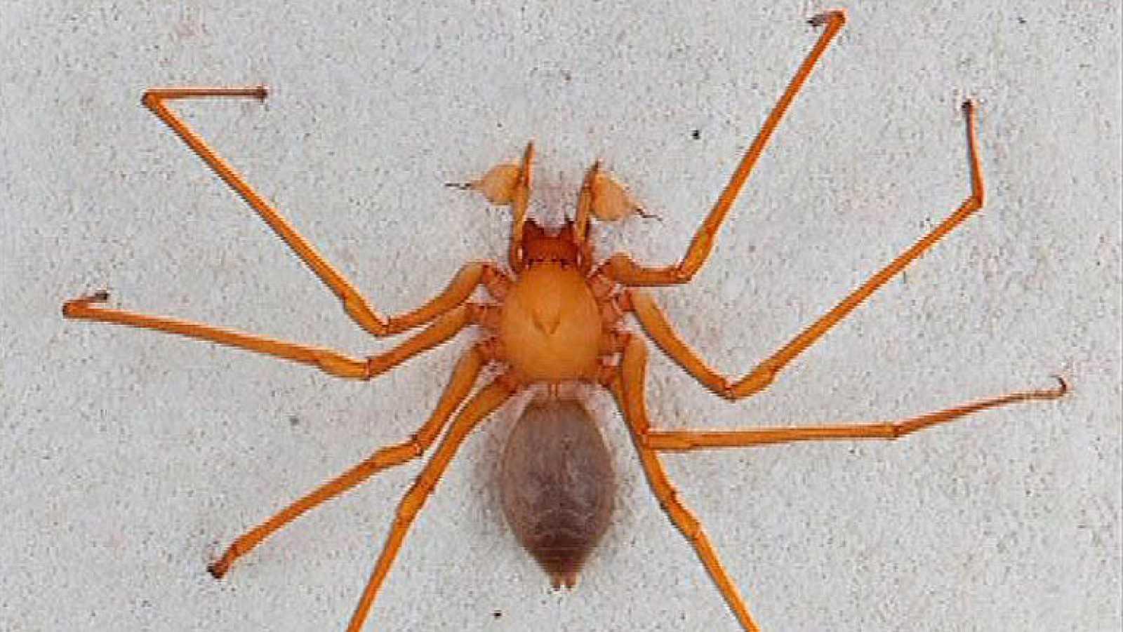 Científicos descubren una nueva familia de araña en cuevas del ...