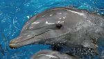 Redes - Entender a los delfines