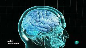 Cómo se conectan las neuronas V.O.