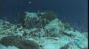 Los arrecifes emergen