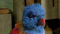 El pájaro del tesoro parlante